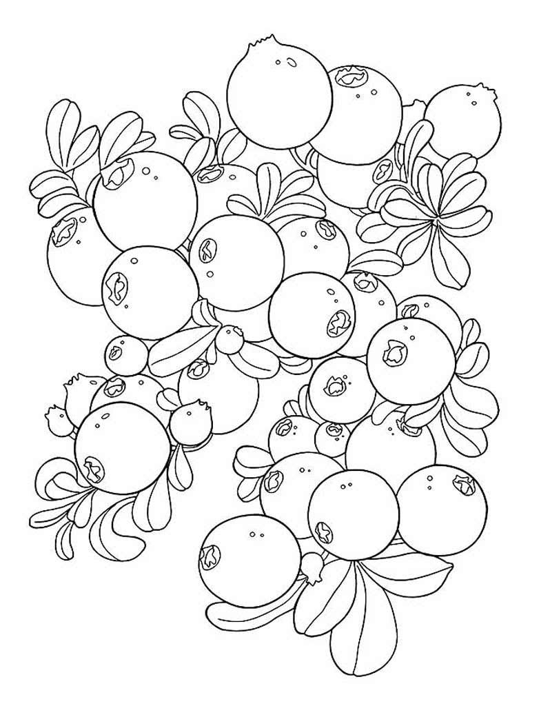 Раскраски Ягоды для детей 3-10 лет. Малина, клубника ...