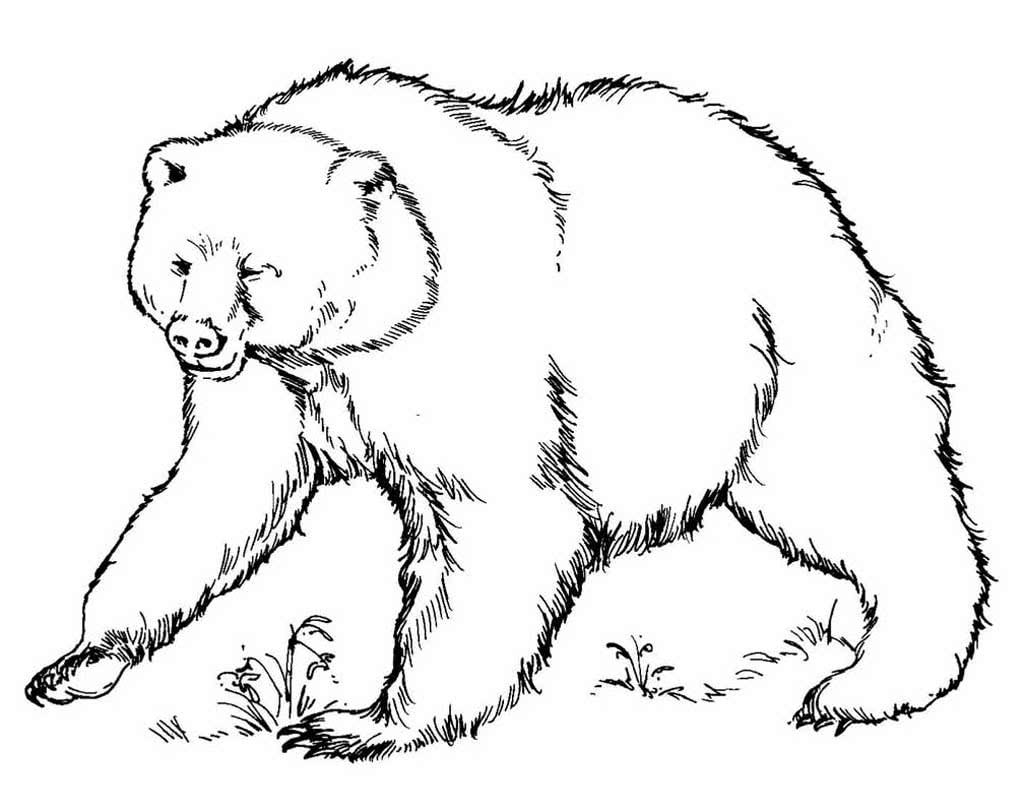 рисунок медведя для раскрашивания определиться выбором