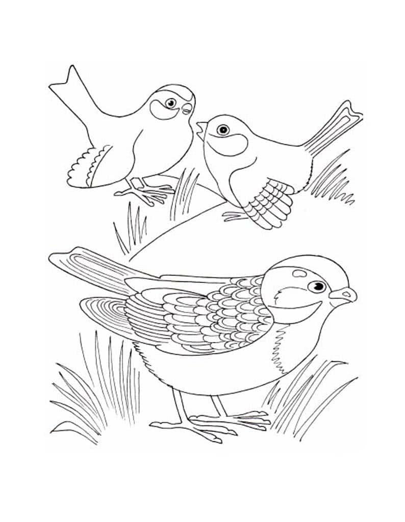 Картинка птиц раскраска для детей
