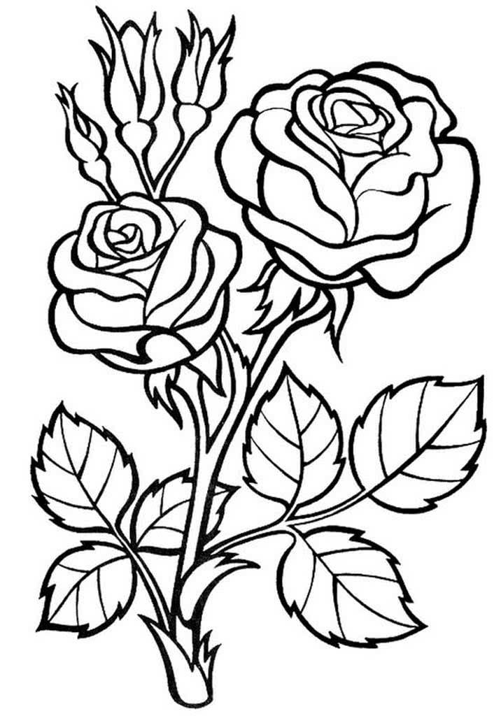 рисунки с букетами роз номера
