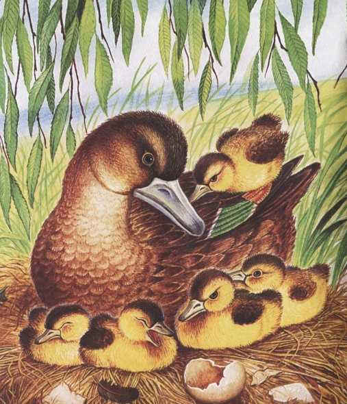 Картинка из сказки ребята и утята